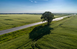 Aerial view of countryside landscape. Aerial view of a tree in the middle of the green field, somewhere near by a road - countryside landscape in Romania Royalty Free Stock Photography