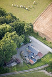 Aerial View : Cows herd walking towards a farm. In the countryside Stock Photo