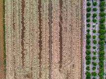 Aerial view of the rice fields. stock image