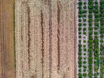 Aerial view creating texture of rice fields and orange trees royalty free stock photography