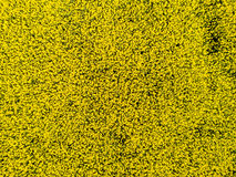 Aerial view of cultivated rapeseed field from drone pov. Aerial view of cultivated rapeseed plantation field from drone pov, blooming oilseed flowers from above royalty free stock photography