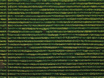Aerial view of cultivated soybean field Stock Photo