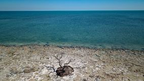 Dead tree in by the ocean stock photos