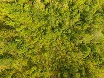 Temperate forest. Aerial view of a decidous temperate forest. Horizontal composition Stock Photos