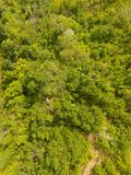 Temperate forest. Aerial view of a decidous temperate forest. Vertical composition Stock Images