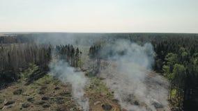 Deforestation, environmental damage. Smoke in the forest, burning wood