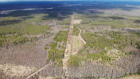 Aerial view deforestation tree cutting spring or autumn grey forest. Ecology.