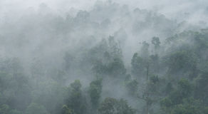 Aerial view of dense, cloud covered jungle in Malaysia. Stock Photography