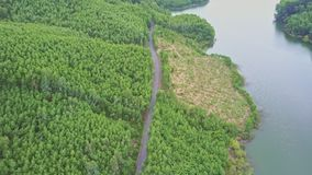 Aerial View Paper Tree Plantations by Road along Lake Creek. Aerial view different paper tree plantations on hill slopes by modern road along lake creek in stock video