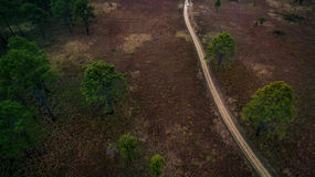 Aerial view of dirt track in pind forest in northern of thailand Royalty Free Stock Images