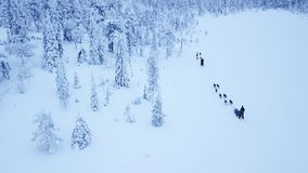 Aerial view of dogsledding in the arctic winter of Finnish Lapla. Aerial view of tourists dogsledding in the white and frozen arctic winter of Finnish Lapland Royalty Free Stock Images