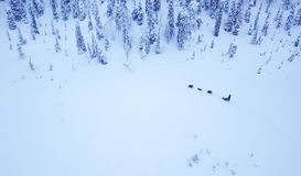 Aerial view of dogsledding in the arctic winter of Finnish Lapla. Aerial view of tourists dogsledding in the white and frozen arctic winter of Finnish Lapland Royalty Free Stock Photography