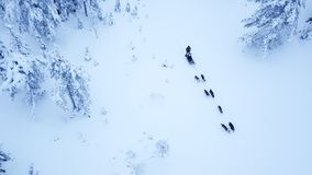 Aerial view of dogsledding in the arctic winter of Finnish Lapla. Aerial view of tourists dogsledding in the white and frozen arctic winter of Finnish Lapland Stock Photography