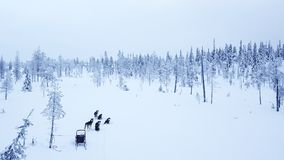 Aerial view of dogsledding in the arctic winter of Finnish Lapla. Aerial view of tourists dogsledding in the white and frozen arctic winter of Finnish Lapland Stock Image