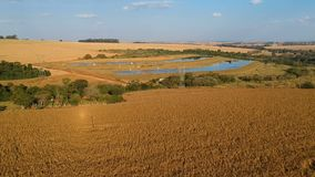 Aerial view of drone from a corn plantation stock footage