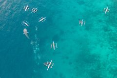 Aerial view from the drone. Fishermen feed gigantic whale sharks Rhincodon typus from boats in the sea in the Philippines,. Oslob... These sharks have no teeth stock photography