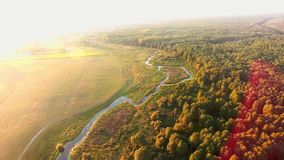 Aerial View Drone Footage Flight: Beautiful River Branching, Green Wood. stock footage
