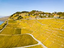 Aerial view with drone over vineyards in golden autumn color, Lake Leman royalty free stock image