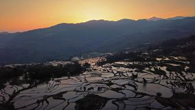 Aerial view from a drone of rice terrace at sunrise, Yuanyang, China stock video