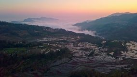 Aerial view from a drone of rice terrace at sunrise, Yuanyang, China stock footage