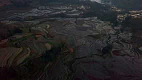 Aerial view from a drone of rice terrace at sunrise, Yuanyang, China stock video footage