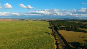 Aerial view of drone of a sugar cane field, coutry road and pasture stock video