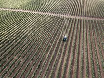 Aerial top view from drone to vineyard with tractor. Aerial view from drone to vineyard with working tractor stock photography