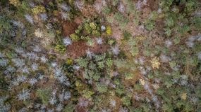 Aerial view of drone, with typical Portuguese forest, crown of trees, pines and oaks. Vegetation green colors flora top shadows shapes rocks autumn tops stock photos