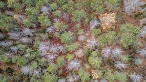 Aerial view of drone, with typical Portuguese forest, crown of trees, pines and oaks. Vegetation green colors flora top shadows shapes rocks autumn tops stock images