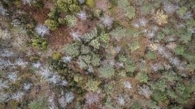 Aerial view of drone, with typical Portuguese forest, crown of trees, pines and oaks. Vegetation green colors flora top shadows shapes rocks autumn tops royalty free stock image
