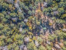 Aerial view of drone, with typical Portuguese forest, crown of trees, pines and oaks. Vegetation, green, colors, flora, top, shadows, shapes, rocks, autumn royalty free stock photo