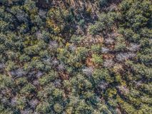 Aerial view of drone, with typical Portuguese forest, crown of trees, pines and oaks. Vegetation green colors flora top shadows shapes rocks autumn tops stock photography