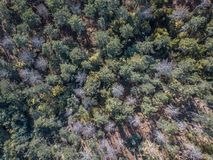 Aerial view of drone, with typical Portuguese forest, crown of trees, pines and oaks. Vegetation green colors flora top shadows shapes rocks autumn tops stock photo
