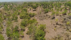 Savanna with trees in Indonesia. Aerial view dry savanna with trees and low vegetation in Indonesia. tropical landscape mountain savanna in asia stock footage