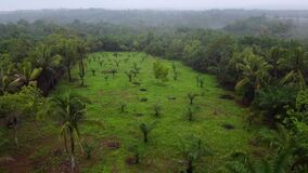 Aerial view of drylands due to deforestation and few trees spotted in Indonesia A