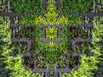 Aerial view eco friendly garden with wooden footpath Royalty Free Stock Image