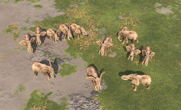 Aerial view of an elephant herd Royalty Free Stock Images