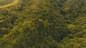 Aerial view evening rainforest. Camiguin island Philippines. Sunset on tropical rainforest, mountains. Aerial view green jungle vegetation, trees and palms stock footage