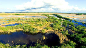 Aerial view of Everglades swamp, Florida Stock Image
