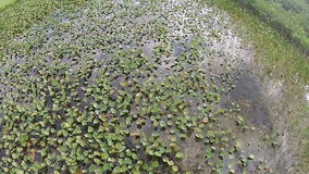 Aerial view of Everglades swamp stock video