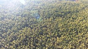Aerial view fall colors tree tops flying over autumn landscape stock footage