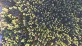 Aerial view fall colors tree tops flying over autumn landscape.  stock footage