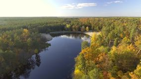 Aerial view fall colors tree tops flying over autumn landscape stock video