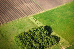 Aerial view of farm with green fields Stock Photography