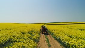 Aerial view of farm tractor in a rapeseed field, beautiful spring day stock video footage