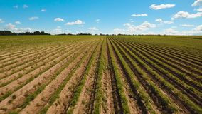 Aerial view of farmland. Aerial view of agricultural, cultivated fields. Agricultural landscape.Irrigated farmland. 4K, flying video, aerial footage stock video