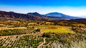 Aerial view of a field with fruit trees and farmland with mountains in the background royalty free stock photo