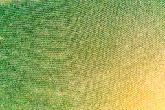 Aerial view of field growing planting rows of corn crops.  stock photo