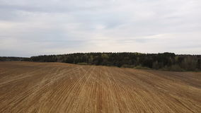 Aerial view of the field after harvesting. Countryside landscape. Brown land without plant, forest on the background. Aerial view of the field after harvesting stock video