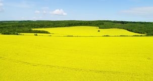Aerial view of a field of rapeseed with beautiful cloud. Green energy. stock footage